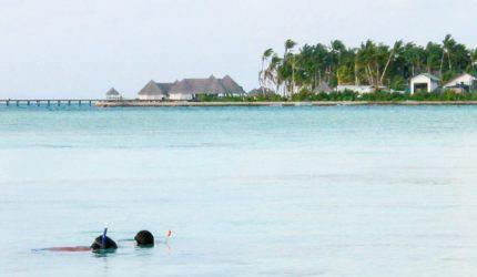 fazer maldivas snorkeling