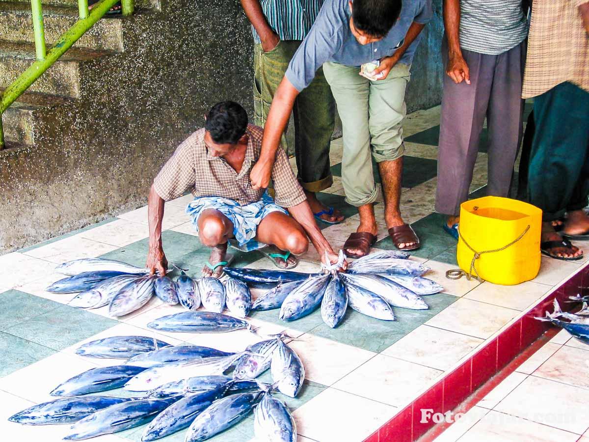 informacoes maldivas economia