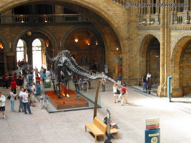 Natural History Museum visitar Londres 7 dias
