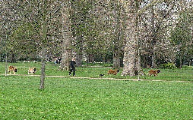 Hyde Park visitar Londres roteiro guia