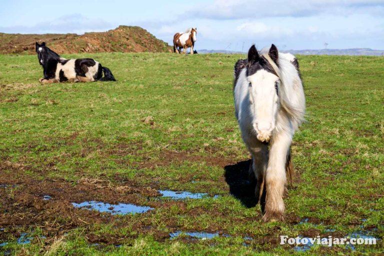 cavalos irlanda