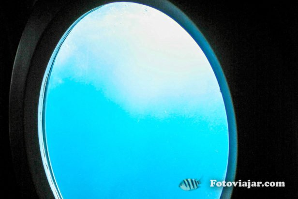 peixe janela submarino maldivas