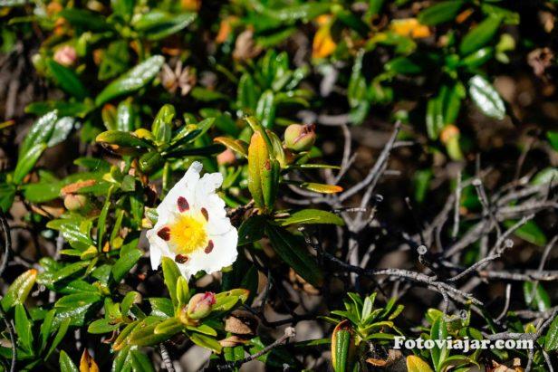 vegetação Odemira