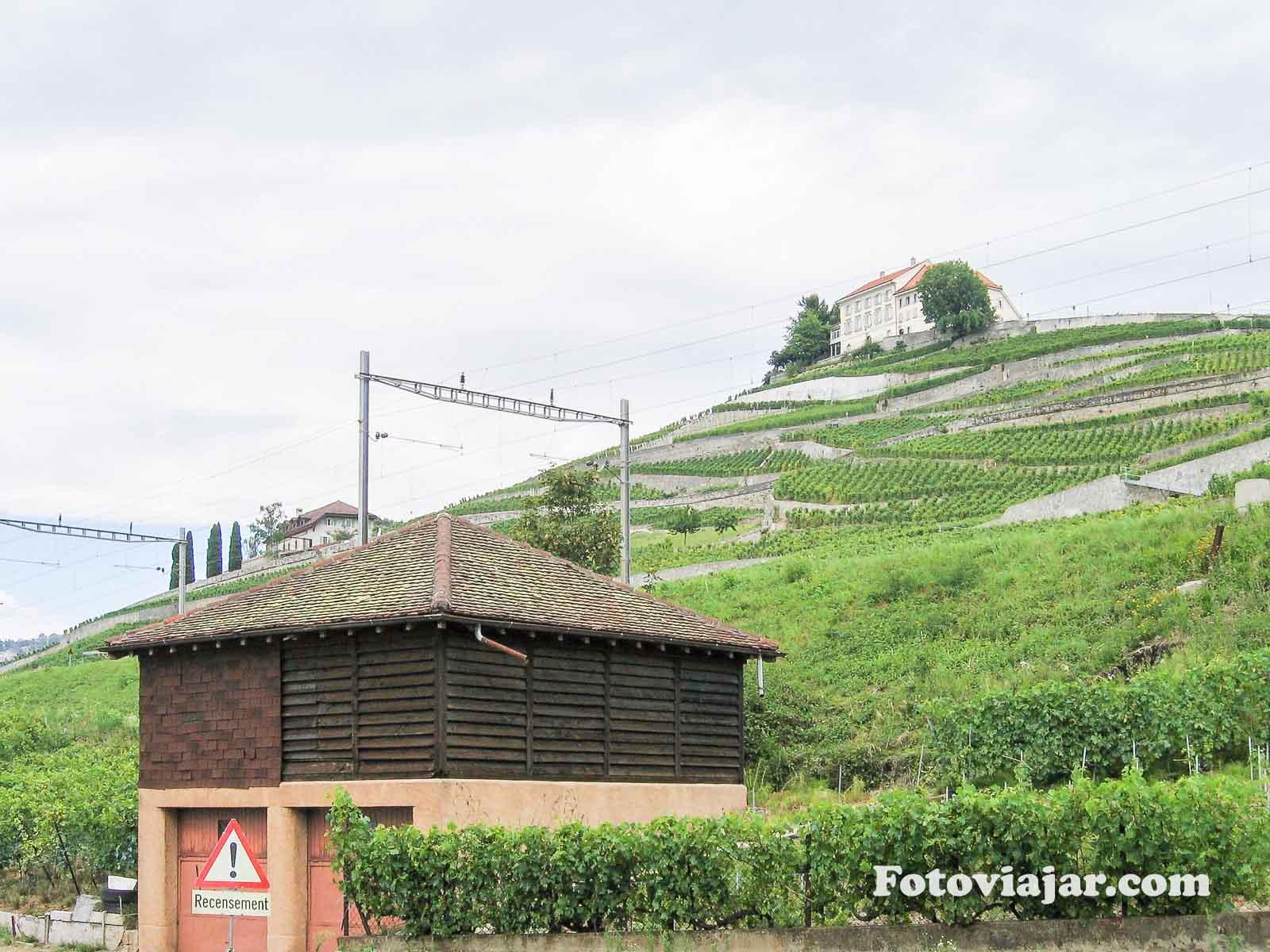 lago genebra vinhas