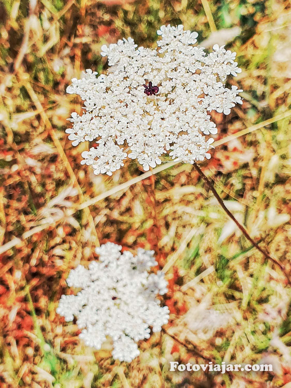 flores alentejo